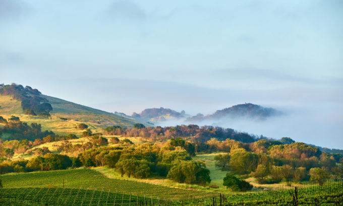 THE GOLDEN STATE OF WINE