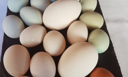 A Cracking Eggscentric Menu